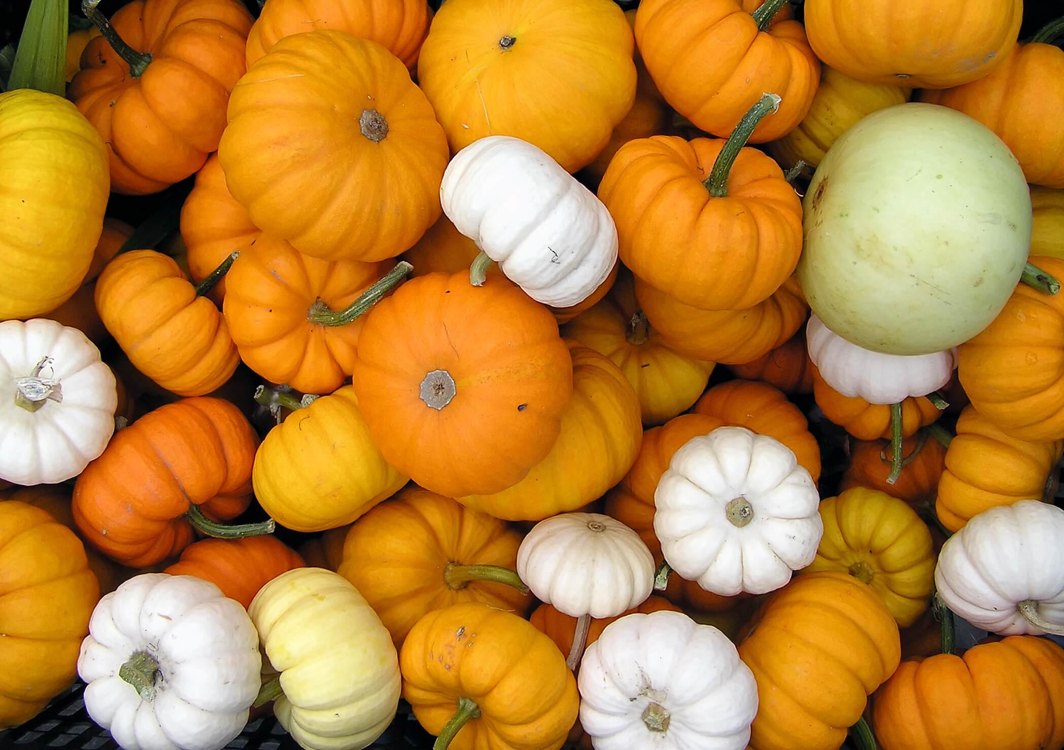 Halloween Gross Motor Activities 5 Little Pumpkins