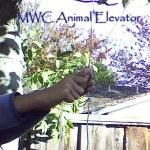 Animal-Elevator-2