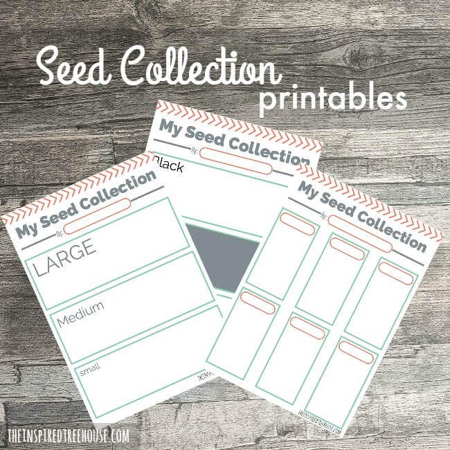 Printable Activities for Kids: Seed Collections - The Inspired Treehouse