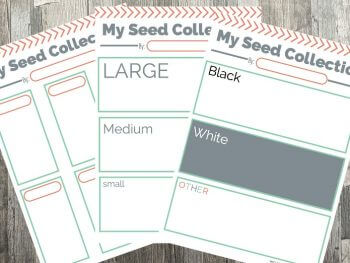 Printable Activities for Kids: Seed Collections