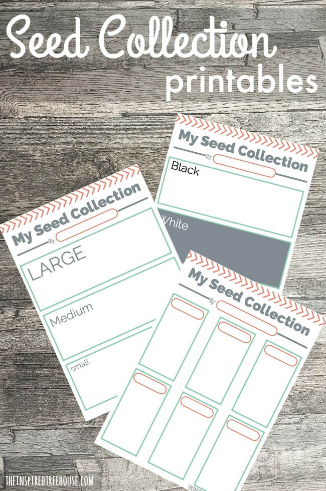 printable activities for kids seed collections the
