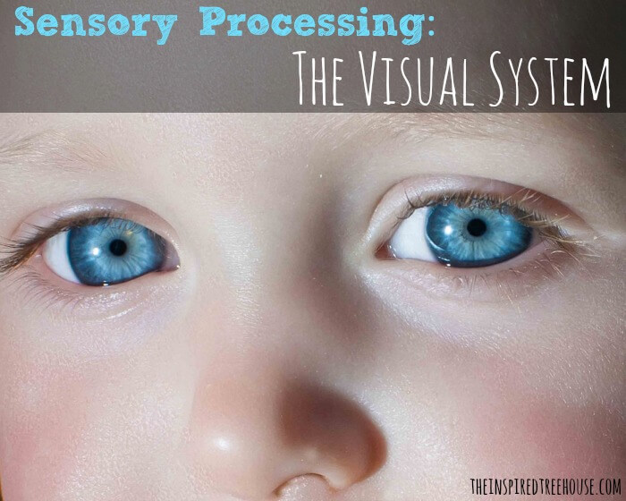 sensory processing visual system image