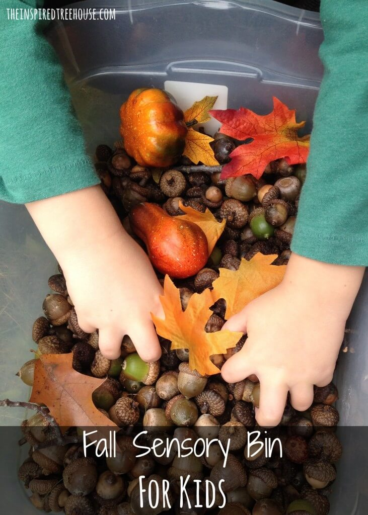 activities for kids acorn sensory bin