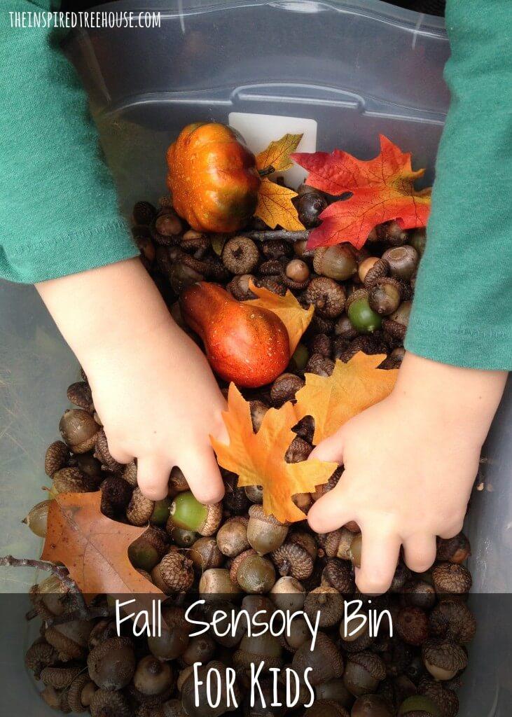 activities for kids acorn sensory bin