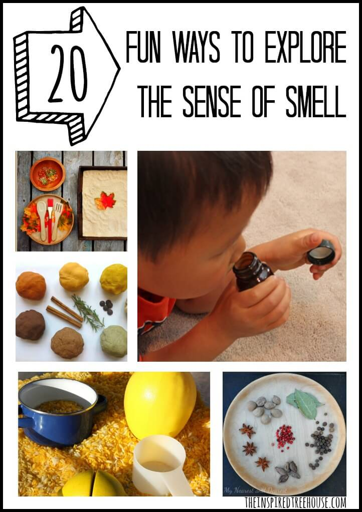 activities for kids explore the sense of smell
