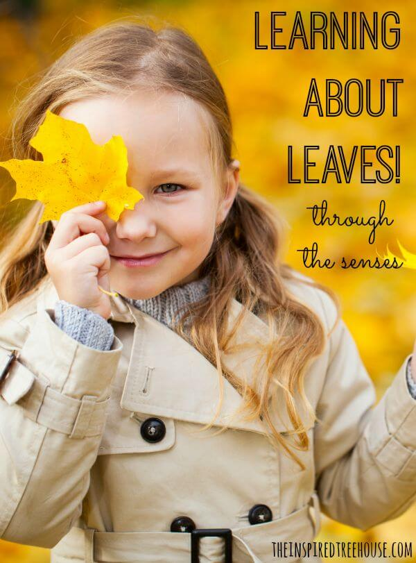 fall activities for kids sensory lesson plan title