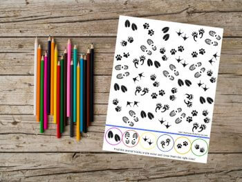 Visual Perception Activities: Snowy Animal Tracks!