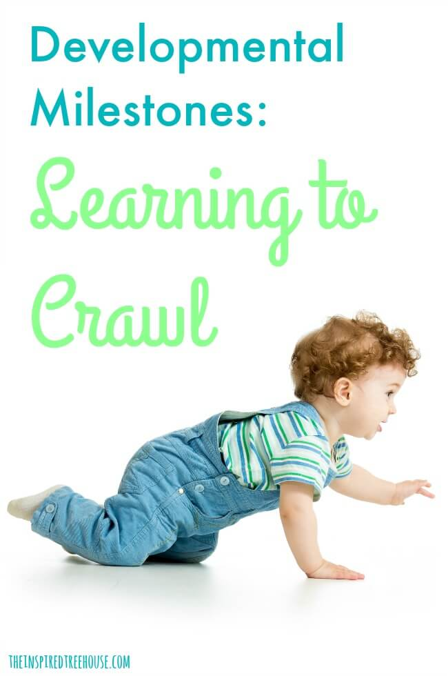 The Inspired Treehouse - Learning to crawl is an important developmental milestone for babies. Learn more about how this skill develops and how you can support your baby as he learns to crawl.